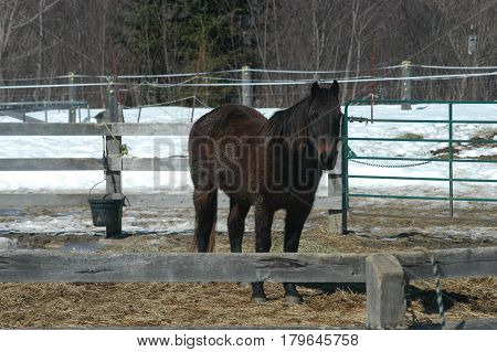 dark brown horse fence pen  snow  ride