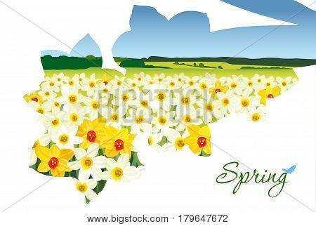 Valley of white and yellow daffodils in a bouquet contour on a white background