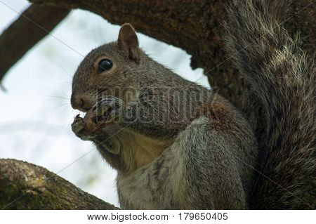 wildlife animal squirrel brown in the park