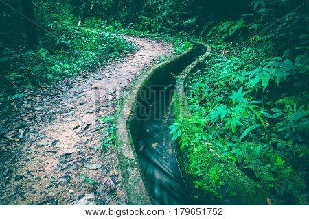 Wallpaper corridors natural drainage ditches. thailand tropical