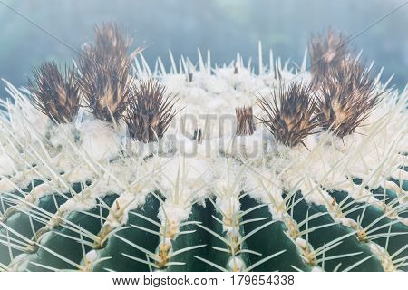 background nature. Natural background Cactus succulent plant.
