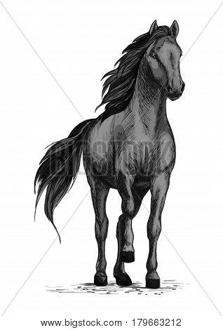 Black wild horse or racehorse standing and stomping hoof. Stallion or mare equine vector sketch symbol for equestrian racing sport, horse riding races club or horserace bets poster