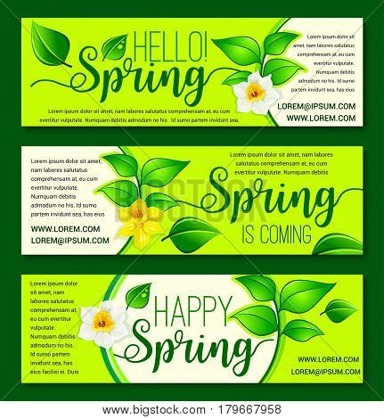 Welcome Spring vector greeting banners with floral and blooming nature. Springtime daffodils flowers and yellow narcissus blossoms on sunny grass and green tendrils. Happy Spring holiday design