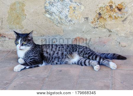 Black and white striped cat cooling on the tiles at the stone wall