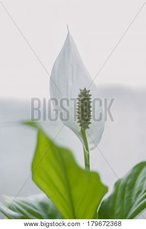 picture of a blossoming white flower at home
