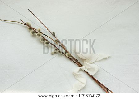 Pussy willow twigs and white egg on white cotton fabric Easter concept purity minimalistic styled image top view