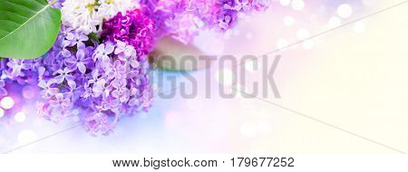 Lilac flowers bunch over blurred background. Beautiful violet Lilac flower Easter border design closeup. Copy space for your text. Wide banner