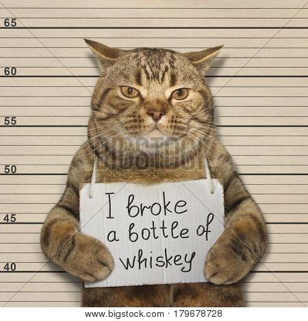 The bad cat broke a bottle of expensive whiskey. He was arrested for it.
