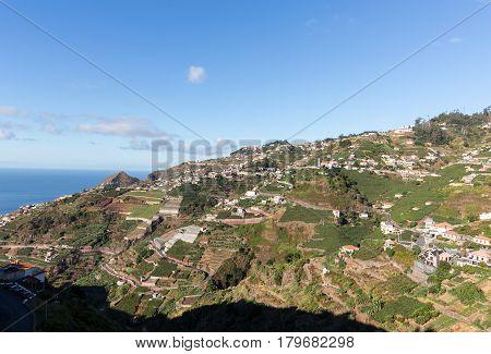 View over the vineyards of the Madeira Wine Company Estreito de Camara de Lobos Madeira Portugal
