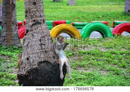 monkey sitting on a tree, palm tree, in a funny pose, gazing at their hands, manicure, serious, attentive, focused look