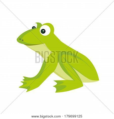 Isolated colored cartoon green color sitting frog with smile on white background.