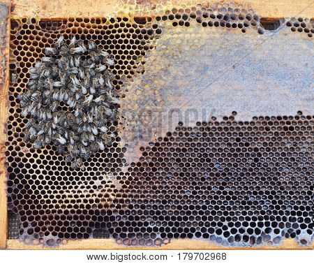 Bees starve to death in winter. The extinction of honey bees. Death and Extinction of the Bees.