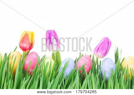 Easter eggs in grass with tulips isolated on white background