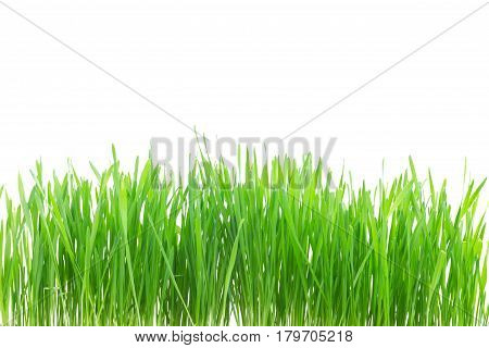 Green grass border isolated on white background