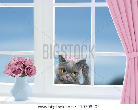 Cat with bow-knot looking through the window