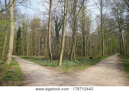 fork in a tree-lined forest path. decision or choice concept.
