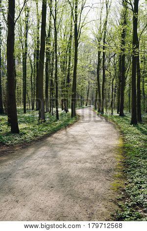 empty forest trail in spring. tree-lined path through deciduous or broadleaf woodland.
