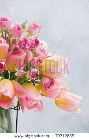 fresh pink and yellow tulips and roses close up on gray background