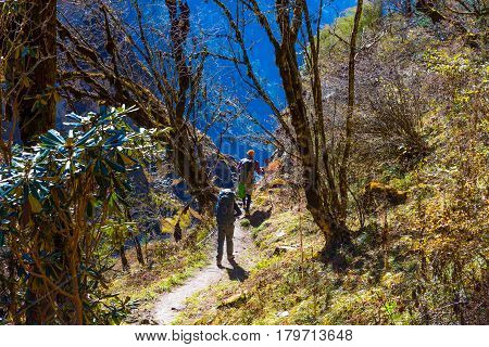 Two People walking on hiking Footpath in tropical rainforest in Nepal Himalaya Mountains backlight sun coming throw trees