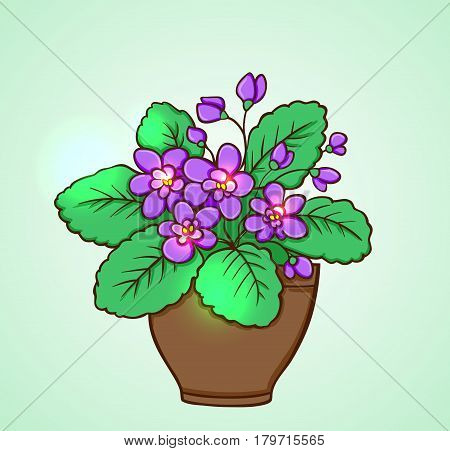 Blooming violets in a flowerpot on a green background. Hand drawn vector illustration.