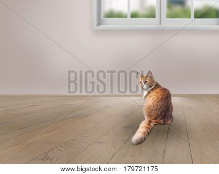 The cat is sitting on the floor in an empty room. Flooring window wall