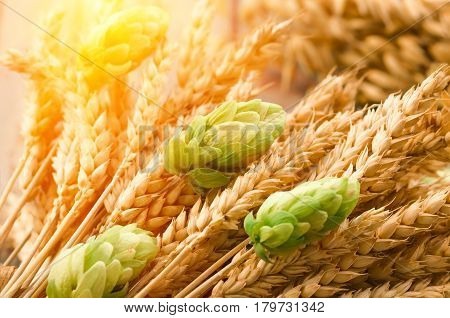 Green hops malt ears of barley and wheat grain ingredients to make beer and bread agricultural background poster