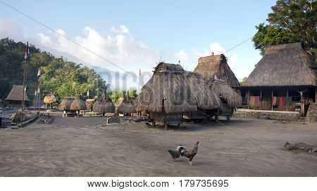 Bena a traditional village with grass huts of the Ngada people and two chickens on the square in Flores near Bajawa Indonesia.