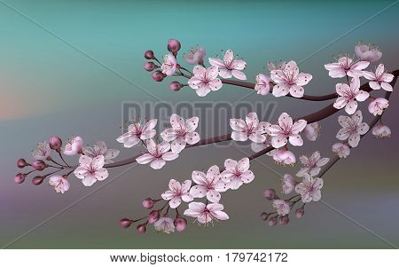 Realistic Sakura Japan Cherry Branch With Blooming Flowers. Nature Background With Blossom Branch Of