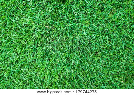 Green Grass Background Top View