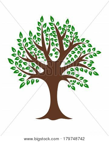 Tree oak birch tree trunk foliage on a white background yazirovannyy vector