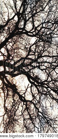 image of a tree branches and twigs like blood vessels.effects added
