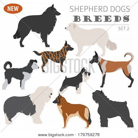 New Collection Dog Shepherd_5