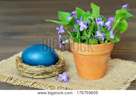 Easter card with blue Easter egg in the nest and violet flowers