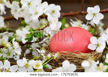 Easter card with Easter egg in the nest and spring flowers on wooden background
