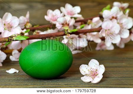 Easter card with green Easter egg in the nest and spring branches