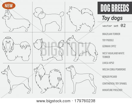 New Collection Dog Toy_8