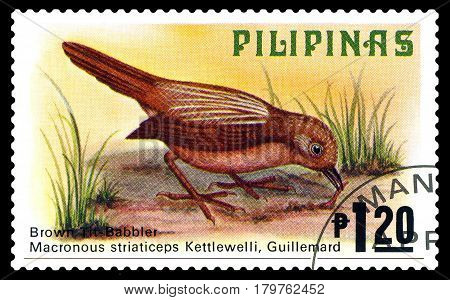 STAVROPOL RUSSIA - March 17 2017: A stamp printed by Philippines shows bird Cinavia babbler Philippine animals circa 1979.