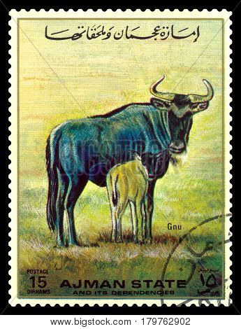 STAVROPOL RUSSIA - April 03 2017: A stamp printed in Ajman shows wildebeest (Gnu) circa 1967