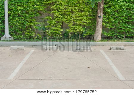 Empty parking space for car with green tree background.