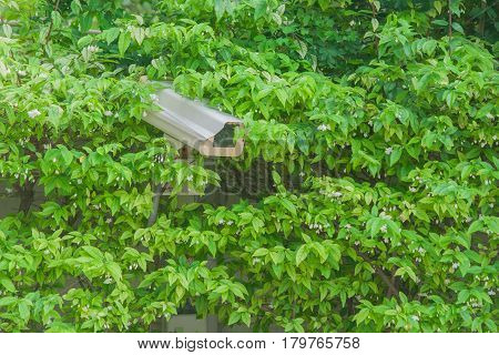 Closed circuit camera in natural green bush.