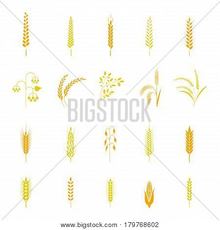 A set of simple wheat ears and design elements, organic wheat fresh local farm products, cereals, bread items. Use for packaging.