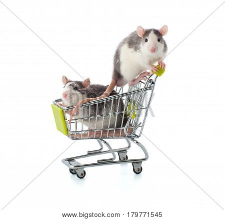 Two Small Gray-white Rats Are Sitting In A Shopping Trolley..