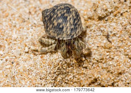 Macro Close Up Of A Hermit Crab With Beautiful Shell