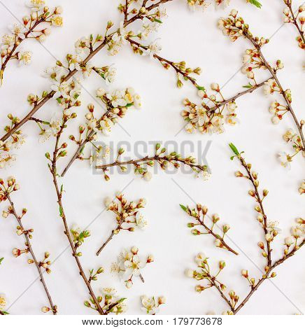 Spring background of blooming twigs with white flowers