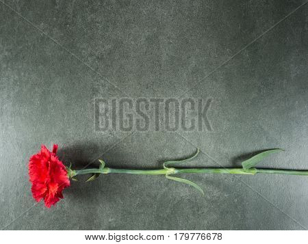 Red carnation over gray granite from top view and free space for text