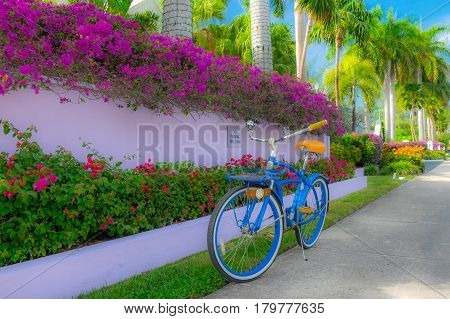 blue bicycle park on the pavement on Cayman islands in front of a fuchsia wall and a flower bed