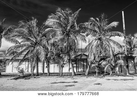 wooden empty motel with palm trees in Cayman islands in black & white