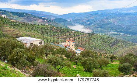 Terraced Fields In Valley Zarga River In Jordan