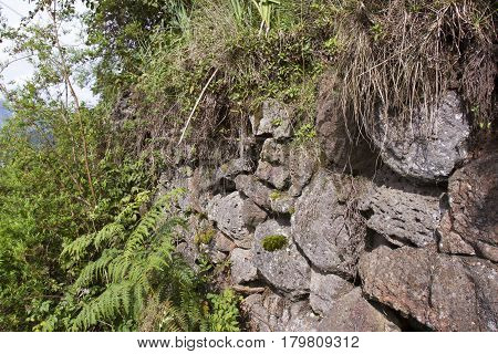 Buffalo Wall In Volcanoes National Park, Virunga, Rwanda