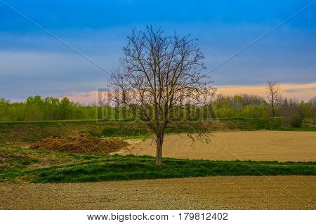 Really saturated landscape with a central tree without leaves